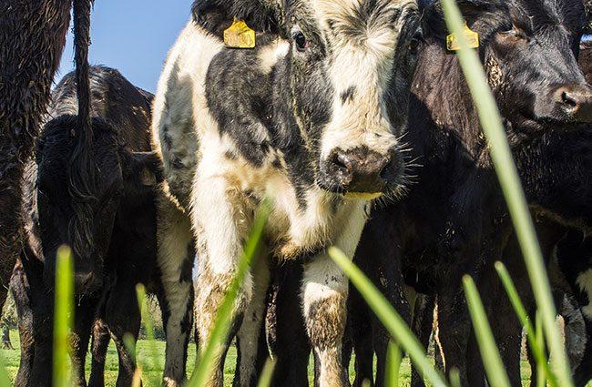 Agritech Cornwall