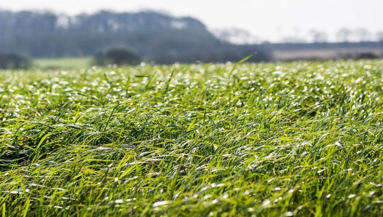Agritech grass