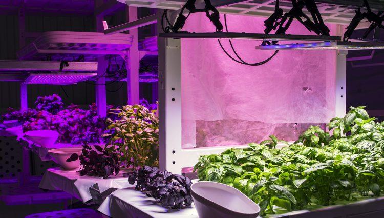 H2Organics Growing